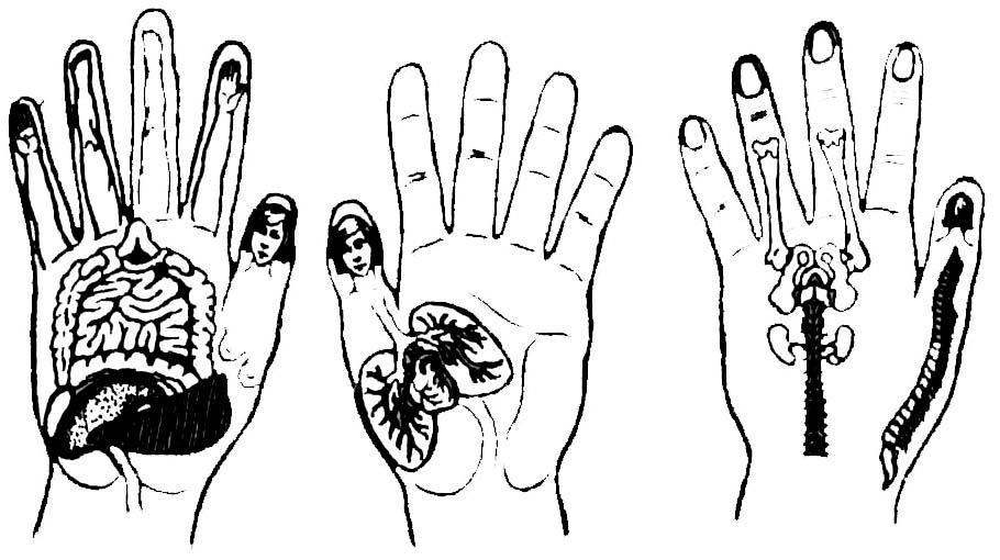 Активные точки су-джок на руке