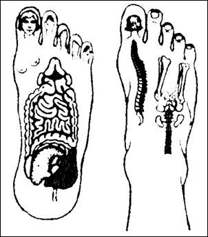 Активные точки су-джок на ноге